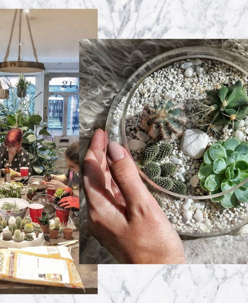 A Plantastic Terrarium Workshop at The Greenhouse, Brentwood