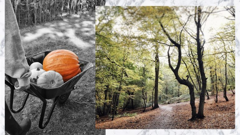 5 Things: Signs That Autumn Is Here